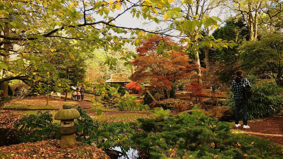 Growth Tree Nature Beauty In Nature Green Color Outdoors Day No People Grass Otoño 🍁 Beauty In Nature Illuminated Heat - Temperature Campo Field Relaxing Nature_collection Nature Photography Japanese Style Japonesegarden Thehague  Park Walking Walking Around Taking Pictures Moments Second Acts