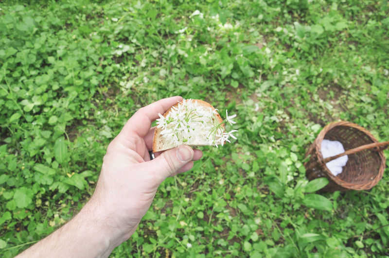Close-Up Of Hand Holding Flowers On Bread