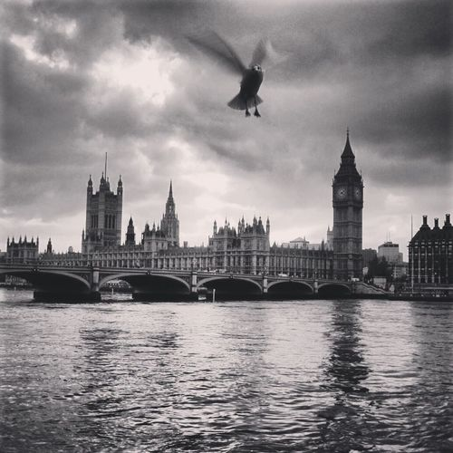 Adapted to the City Bird Flight Black And White River Big Ben