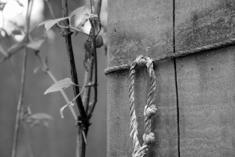 Twine Knot on Garden Arbor Arbor Black & White Black And White Black And White Collection  Black And White Photography Black&white Black&white Photography Fence Post Grayscale Greyscale Knot Knotted New Growth String Twine, Cord, Yarn, Thread, Strand, String