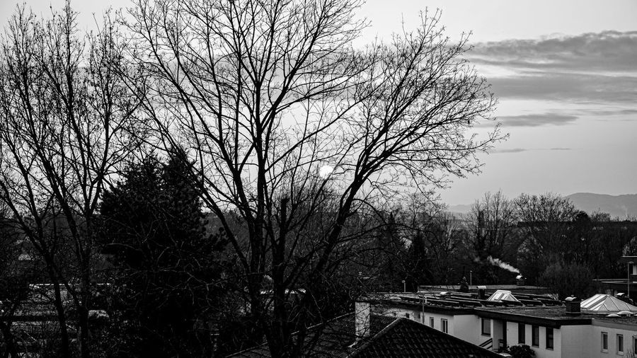 Bare tree and buildings against sky