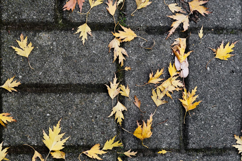 Autumn Autumn colors Autumn Leaves Autumn Collection Prunus Felsenbirne Juneberry Leaf Plant Part Change Leaves Falling High Angle View Dry Day Nature No People Yellow Maple Leaf Road Footpath Street Outdoors Directly Above City Close-up Natural Condition Fall Messy