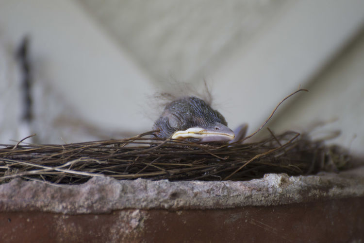 Animal Wildlife Animals In The Wild Beautiful Newborn Bird Bird Nest Close-up Little Animals Nature One Animal Moments Of Happiness