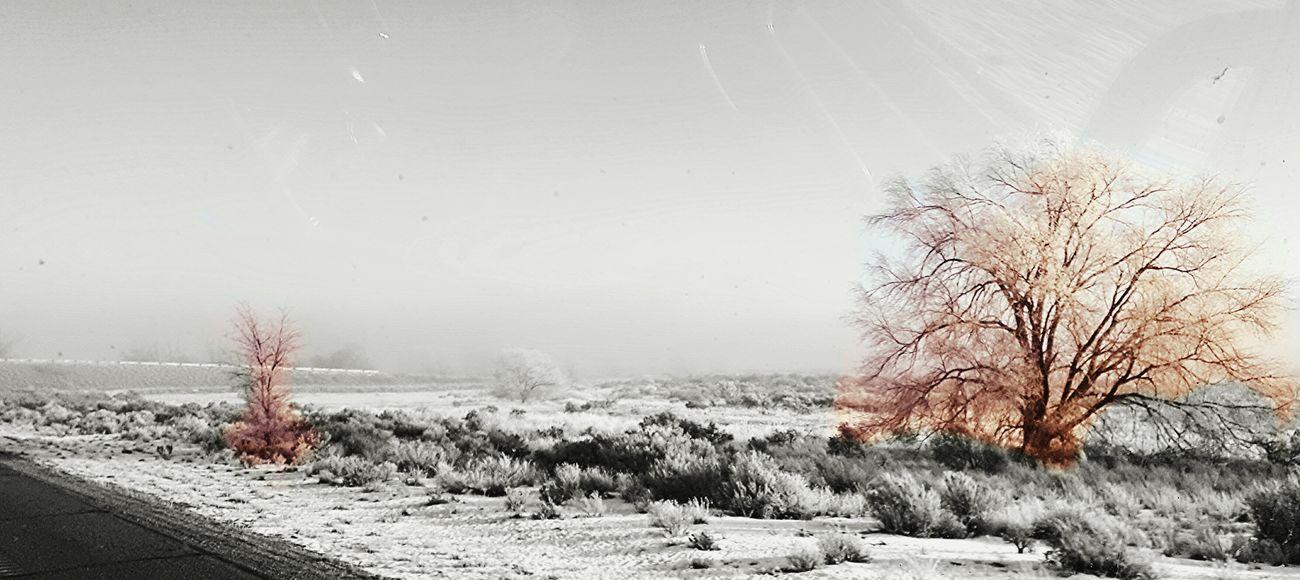 Desert flames.