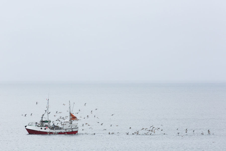 Flock of seagulls following a trawler Aquatic Beauty In Nature Copy Space Day Fishing Boat Fishing Industry Flock Of Birds Fog Following GREED Horizon Over Water Hungry Nature Nautical Vessel Norwegian Sea Outdoors Overcast Rippled Sea Seagull Seascape Sky Transportation Troms County Waterfront The Great Outdoors - 2017 EyeEm Awards