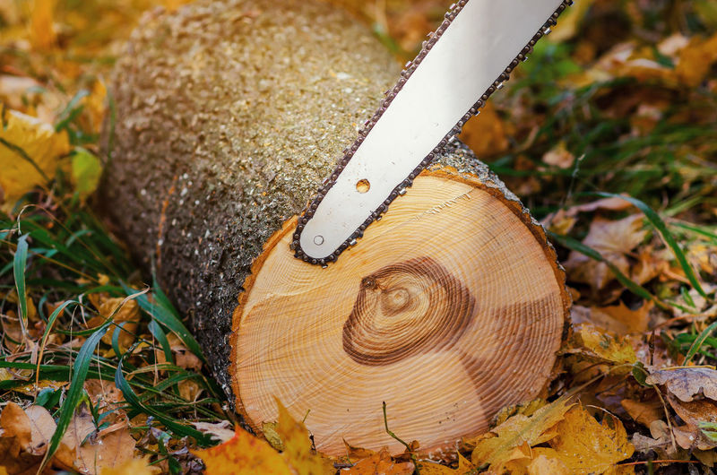 Close-up of chainsaw cutting log on land during autumn