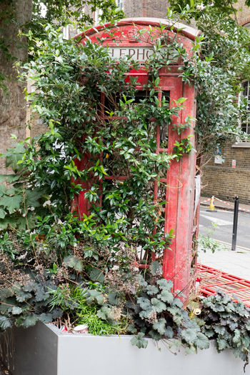 Mobile phone victim End Of An Era Red Phone Box Architecture Built Structure Communication Day Evolution  Green Color Growth Leaf Mobile Phones Nature No Communication No People Old Outdoors Phone Booth Phone Box Plant Plant Part Reclaimed By Nature Recycling Red Red Phone Booth Sign Of The Times