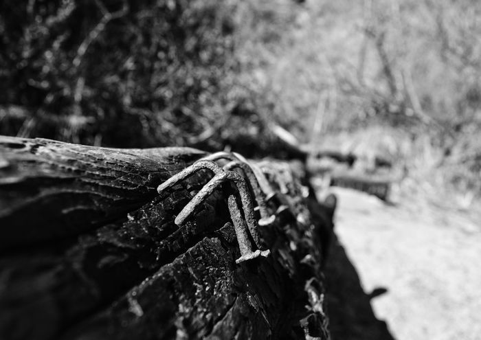 In The Coffin Nails Rusty Nails Bnw Black And White Wood Texture Up Close Detail Nailed Natural Light Bnw_collection Bnw_captures Bnw_life