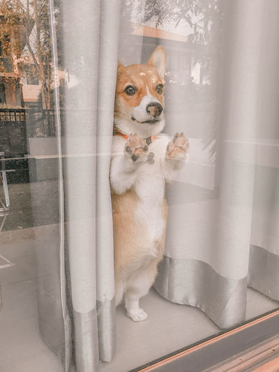Portrait of dog looking through window