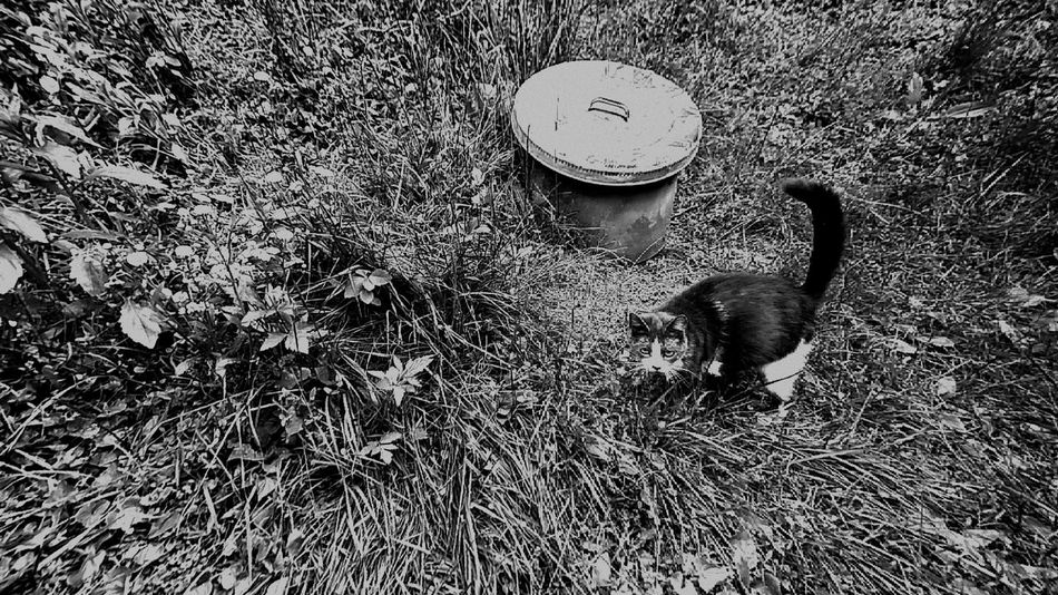 Pets Pet Photography  Pet Love Pet Pets Of Eyeem Outdoors Grass Black And White Photography Blackandwhite Cat Catoftheday Cat Lovers Cat Photography Outside Cats Nature Photography Enjoying Life Eye4photography  Enjoying Nature Outside Photography