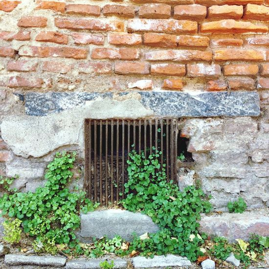 Wall - Building Feature Architecture Built Structure Brick Wall Building Exterior Day Outdoors No People Plant Window Green Color Nature Close-up Getting Inspired Getting Creative Architecture Architectural Detail Textures And Surfaces Plant
