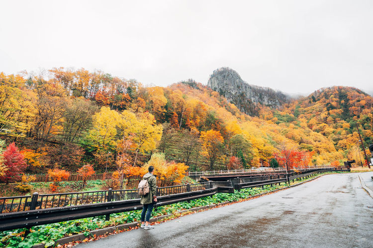 Daisetsuzan Autumn Change Tree Nature Plant Transportation Day Railing One Person Full Length Beauty In Nature Road The Way Forward Orange Color Bridge Connection Scenics - Nature Sky Real People Outdoors Autumn Collection