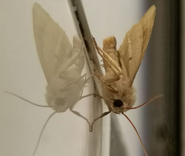 Taken With The Huawei P9 Macro Nature Beauty Unusual Beauty Wildlife Insect Photography Insects  Moth