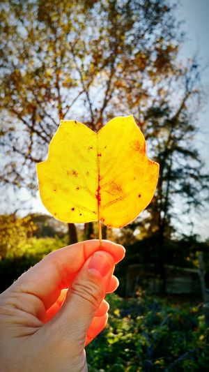 Leaf Yellow Fall Leaf Atumn Leaf Trees Hand Sun Lines Leaf Skeleton