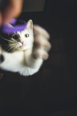 One ring to rule them all. EyeEm Animal Lover EyeEm Best Shots EyeEm Selects Animal Themes Cat Catpeople Domestic Animals Domestic Cat Feline Kitty Cat Mammal One Animal Pets