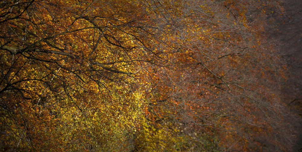 Close-up of tree in forest during autumn