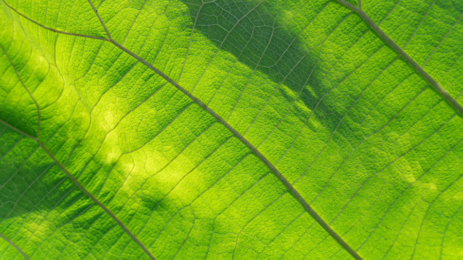 Green Color Leaf Vein Plant Part Leaf Plant Full Frame Backgrounds No People Close-up Nature Natural Pattern Beauty In Nature Pattern Textured  Growth Macro Extreme Close-up Environment Day Outdoors Magnification Palm Leaf Leaves Abstract Backgrounds Concentric