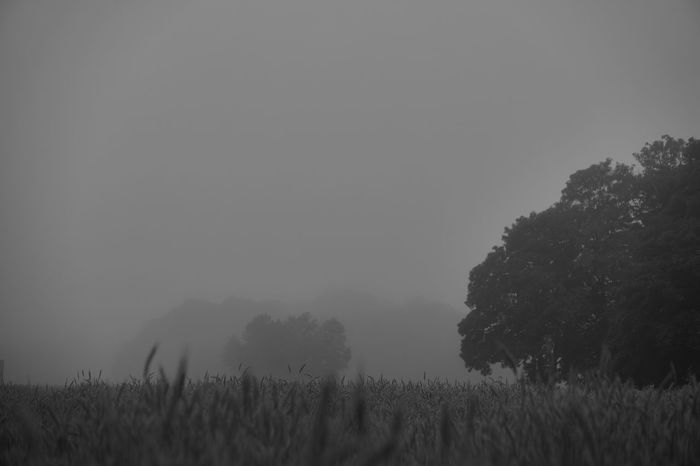 foggy morning Lucky's Monochrome Lucky's Mood Lucky's Memories Foggy Foggy Morning Melancholic Landscapes Landscape Nature Field Misty Monochrome Monochrome_life Monoart Black & White Black And White Black&white Love Morning Walk Silence Mood NEM Silence Shootermag EyeEm Gallery Bittersweet Life Melancholy