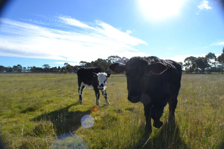 Young steers dropping albums. Popular Photos Landscape