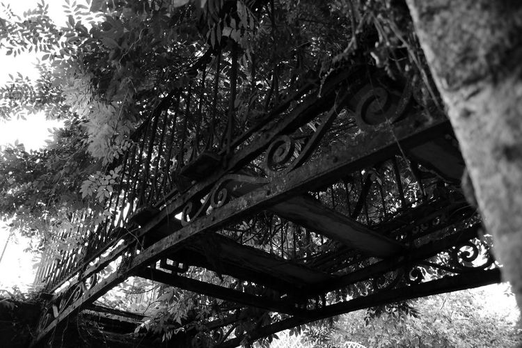 ancien temps.. Nikon D5600 Photo Photography Picoftheday Nature Tree Close-up Sky Architecture Plant Bark