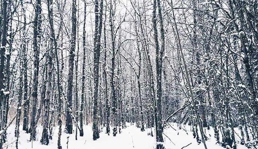 ❄️🌲 Forest Winter Winters Beautiful Mothernature Trees Snow Snowy Winterforest Instagood Picoftheday PNW Pacificnorthwest Upperleftusa AOV Artofvisuals Iphonography Photo Perspective VSCO