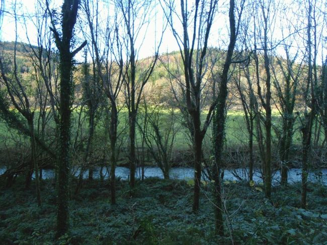 A sanctuary. .. Forest Woods Wales North Wales River Trees Valley November Лес река Hills Nature Beautiful