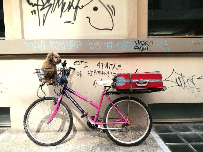 Bicycle No