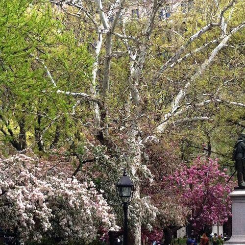 Washington Square Park, Greenwich Village, New York City. Tomaca Nature Tomacag Tomacaphotos New York City