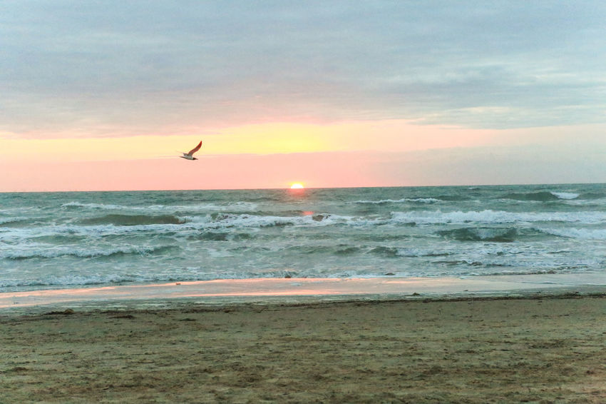 Beauty In Nature Bird Flying Horizon Over Water Scenics Sea Sky South Padre Island Sunrise Water Wave