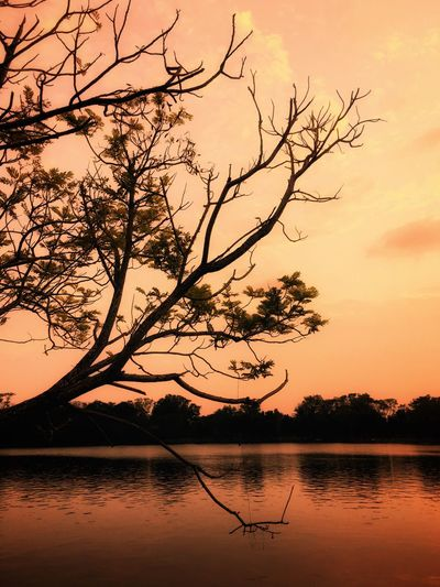 Calm Calmness Alone Time Tree Sunset Lake Silhouette Beauty In Nature Nature Sky Orange Color Scenics Water Tranquil Scene Tranquility Outdoors Reflection Branch Bare Tree Tree Trunk No People Landscape My Fevorite Place
