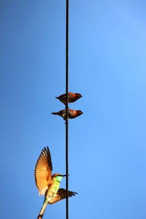 Birds Birds_collection Bird Photography Indian Birds EyeEm Birds