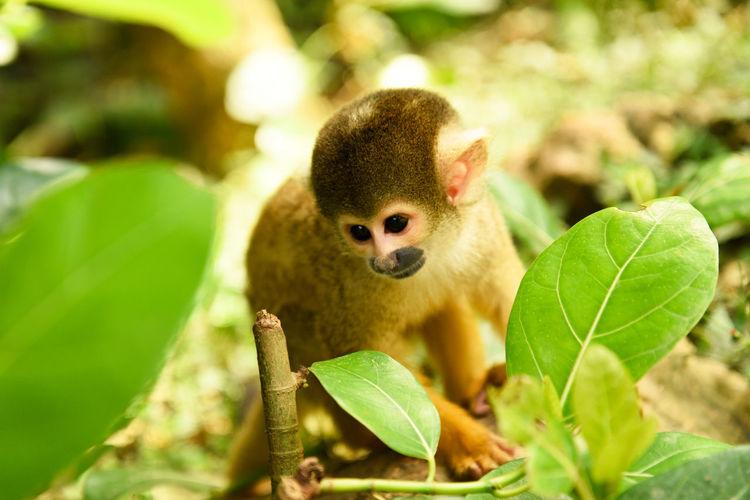 Close-up portrait of monkey sitting outdoors
