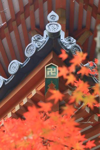 清水寺 清水寺三重塔 Japanese Maple Japanese Temple Maple Temple Autumn Scenery