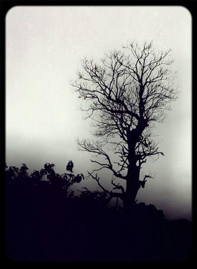 Blackandwhite Spooky Tree