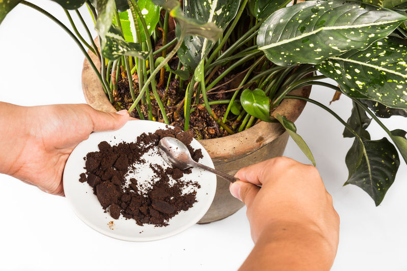 People adding recycle grounded coffee as natural fertilizer onto potted plant Coffee Coffee Beans Food And Drink Gardening Grounded Coffee Human Hand Leaf One Person Personal Perspective Plant Part Powder Recycle