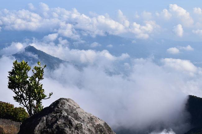 Gede Mountain Gunung Gede Gunung Gede Pangrango Cibodas Mountain Outdoors Puncak Gede Puncak Gunung Gede