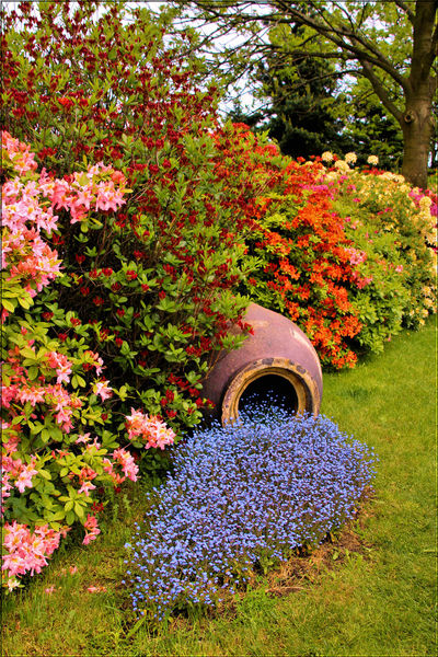 Beauty In Nature Flower Nature Plant Azaleas Garden