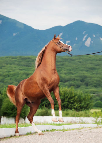 Animal Animal Themes Close-up Day Domestic Animals Hoofed Mammal Horse Landscape Mammal Mountain Nature No People One Animal Outdoors Riding Rural Scene Scenics Sky Travel