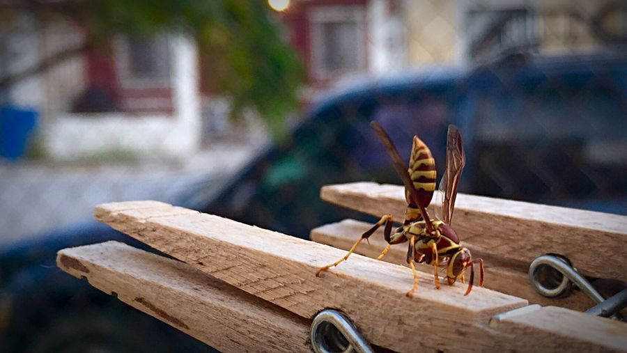 Close-up of insect perching on wooden clothespin