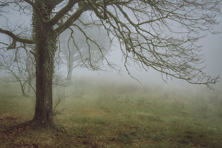 the morning Countryside Tree Tranquility Scenics Taking Photos Taking Pictures Getting Inspired Getting Creative Eye4photography  Nature_collection Nature_collection Nature Photography Outdoor Photography Outdoors Water Spooky Sky Rainy Season Foggy Weather