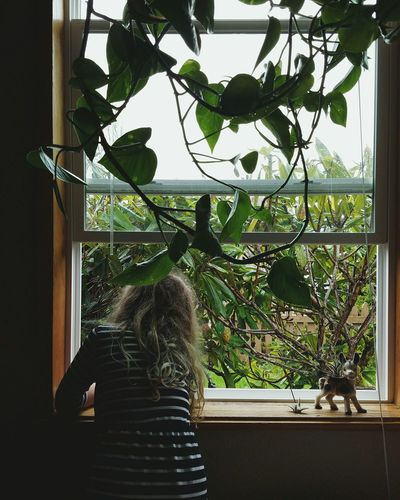 Home Interior Indoors  Window Plant Day Leaf Branch Nature Child
