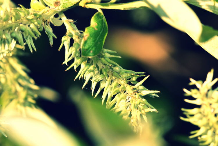 Beauty In Nature Close-up Focus On Foreground Green Green Color Leaves Nature Outdoors Plant