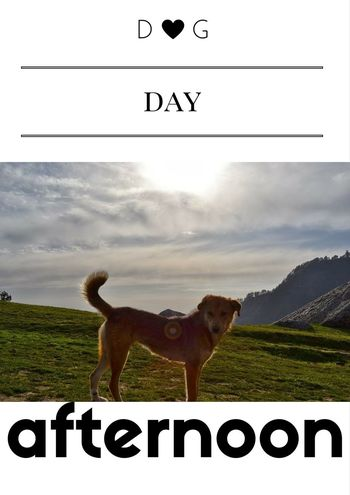 Dog Dog Day Afternoon Dog Day Out Dog Outdoors Dogslife Love For Animals Love My Dog❤️ Who Let The Dog Out?