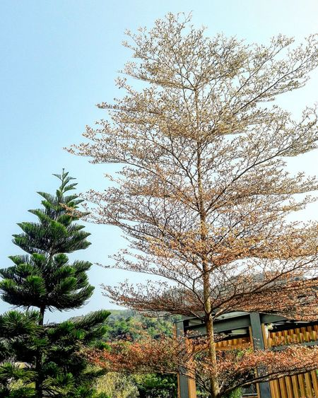 Tree Growth Sky No People Nature Outdoors Day Beauty In Nature Outdoor Photography Hang Hau Park
