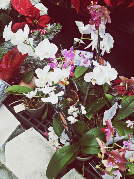 Orchids Favoriteflower