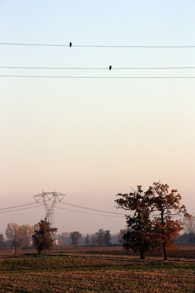 Birds on High Voltage Lines Agriculture Atmospheric Mood Birds Birds On High Voltage Lines Cable Clear Sky Electricity  Electricity Pylon Outdoors Sky Trees Weather Parco Sud