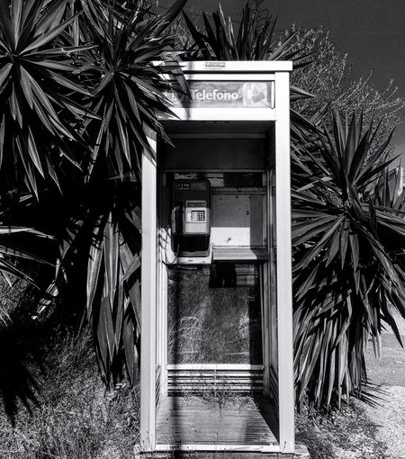 No signal. Built Structure Outdoors Tree No People Architecture Day Communication Plant Building Exterior Palm Tree Black&white Blackandwhite Photography Black And White Iphone6 IPhone Photography Nature Telephone Vcsocam Vcsco Welcome To Black Street Photography Urbanphotography Retro Vintage Vintage Style