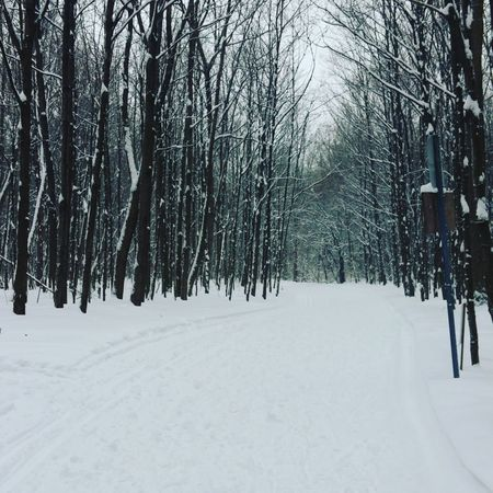 #pistedeski Myjob Sentier Skidefond Snow Winter Cold Temperature Tree Frozen Pinaceae Outdoors Nature Pine Tree Forest Beauty In Nature Sky Snowing Polar Climate Day