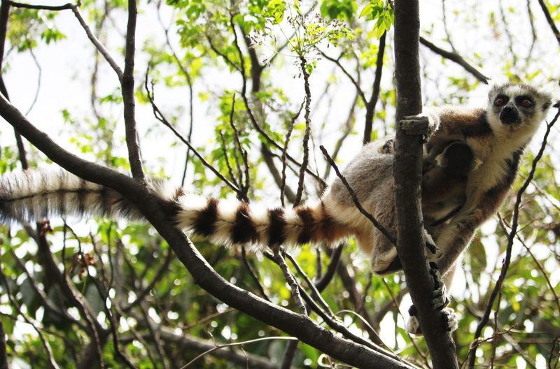 Tree Animals In