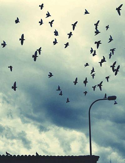 """""""Dünyada ne kadar kuş varsa,bir fazlası senin soluğunda..."""" Birds🐦⛅ Sky EyeEm Gallery No People Animal NERESİBURASI.. . Adana Turkey ✔✅💠 Ulucamii"""